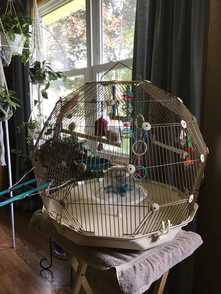 engineering of a birdcage